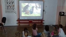 Zdjęcie dzieci oglądających film na tablicy interaktywnej