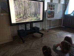 dzieci oglądają prezentację o krzywym lesie