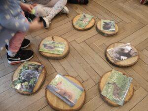 plastry drewna leżą na podłodze. Są na nich przyczepione ilustracje zwierząt leśnych