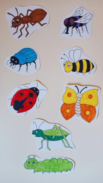 rysunki owadów: mrówka, mucha, chrabąszcz, pszczoła, biedronka, motyl, konik polny, gąsienica