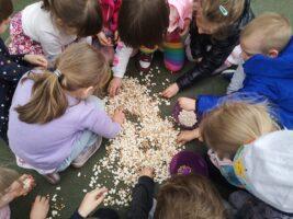 dzieci segregują nasiona
