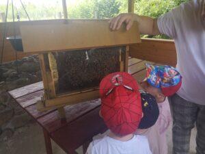 dzieci ogladają pszczoły