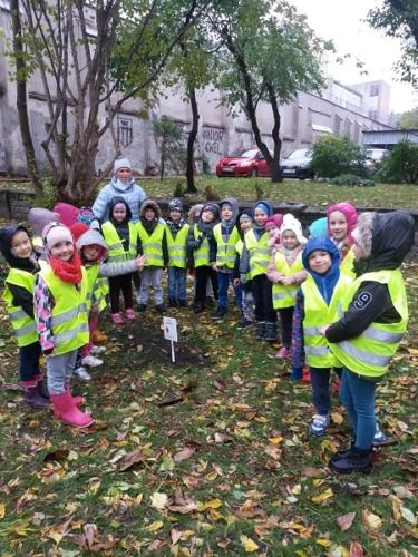 Sadzimy drzewa - Biedronki