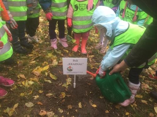 Sadzimy drzewa - Krasnale