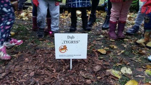 Sadzimy drzewa - Tygrysy