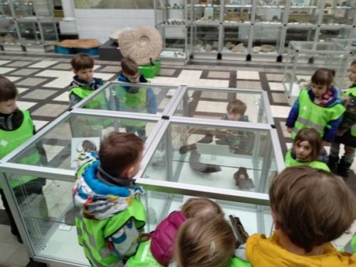 Tygryski w Muzeum Geologicznym-2